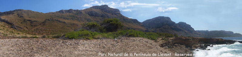 Parc Natural de la Pen�nsula de Llevant.  Reserves natural de Cap de Ferruxt.